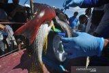 21 tim ikuti lomba memanah ikan  di Teluk Tomini Parigi Moutong