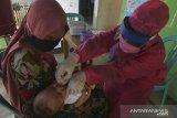 Penanganan stunting di Kupang ikuti protokol kesehatan