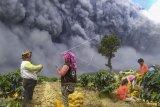 Warga memanen kentang dengan latar belakang Gunung Sinabung yang menyemburkan material vulkanik di Karo, Sumatera Utara, Senin (10/8/2020). Gunung Sinabung erupsi dengan tinggi kolom 5.000 meter di atas puncak atau sekitar 7.460 meter di atas permukaan laut. ANTARA FOTO/Sastrawan Ginting/Lmo/pras.