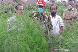Pemerintah dorong pengembangan asparagus di Temanggung