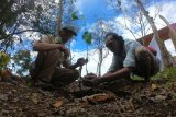 Petugas Taman Nasional Kerinci Seblat (TNKS) dan Anggota Komunitas Kerinci Trek Indonesia (kanan) menanam pohon di Pintu Rimba Pendakian Gunung Kerinci, Kerinci, Jambi, Senin (10/8/2020). Kegiatan yang dibarengi aksi pungut sampah oleh puluhan anggota komunitas pendaki dan petugas TNKS di beberapa titik kawasan wisata pendakian taman nasional itu dalam rangka memperingati Hari Konservasi Alam Nasional 2020. ANTARA FOTO/Wahdi Septiawan/wsj.