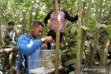 Usai diserahkan pengelola waterboom, BKSDA Resor Agam lepasliar kukang di cagar alam Maninjau