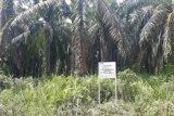 Lahan sawit seluas 530 hektare terkait kasus Nurhadi disita