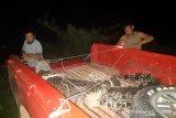 Buaya muara terkam kambing warga Inhil dievakuasi BBKSDA