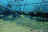 PT Timah pionir lakukan reklamasi laut