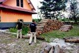 Gakkum KLHK berhasil amankan sejumlah kayu ilegal di Kobar