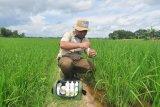 Pusri Palembang berdayakan 93 mantri tani bantu petani aplikasikan pemupukan