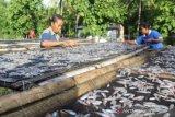 Artikel - Belajar dari Hadakewa, geliatkan ekonomi warga dengan dana desa