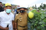 Gubernur Arinal panen perdana melon dan semangka di kebun Agrowisata Pesawaran