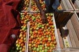 Pemprov Sulteng dorong masyarakat kembangkan komoditi hortikultura