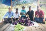 PT MAS bantu warga bertani hingga pasarkan hasil panen