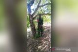 Seorang anggota TNI ditemukan tewas tergantung di pohon dengan tangan terikat