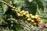 Pemkab Sigi  dorong petani lakukan diversifikasi komoditi pertanian