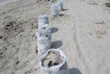Walhi beberkan hasil penelitian pencemaran limbah di Pantai Lampung Timur