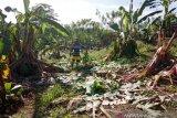 Belasan gajah mengamuk dan merusak rumah warga
