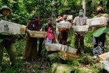 Penyelundupan 212 ekor burung ke Jawa Tengah kembali digagalkan