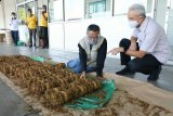 Gubernur pastikan pabrik rokok beli tembakau petani