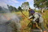 Petugas Dinas Kehutanan Provinsi Kalsel berusaha memadamkan kebakaran lahan gambut di Kawasan Liang Anggang, Banjarbaru, Kalimantan Selatan, Kamis (27/8/2020). Petugas gabungan yang terdiri dari Dinas Kehutanan, Manggala Agni, serta dua helikopter milik Badan Nasional Penanggulangan Bencana (BNPB) dikerahkan untuk memadamkan kebakaran lahan gambut tersebut. Foto Antaranews Kalsel/Bayu Pratama S.