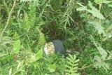 Geger! Mayat wanita posisi telungkup di semak-semak ditemukan warga