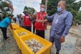 Pakan udang produksi Perum Perindo tebar perdana di tambak udang Bratasena