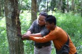 Kabupaten Musi Banyuasin target seluruh pembangunan jalan gunakan aspal karet