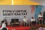 Senator dukung percepatan peremajaan sawit rakyat PTPN V
