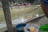 Meracik jajanan jadi umpan  andalan memancing ikan