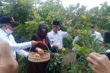 Wali Kota Mataram mencanangkan agrowisata hortikultura
