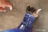Petugas Damkar Cengkareng selamatkan anak kucing tersangkut di mulut galon