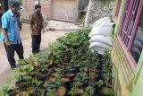 Cegah krisis pangan, warga Kudus optimalkan pemanfaatan pekarangan