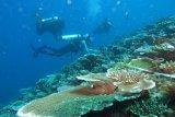 KKP dorong pemda untuk buat taman terumbu karang jadi wisata bahari