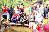 Disnakan Ogan Komering Ulu bantu  kelompok tani 3.000 bibit ikan baung