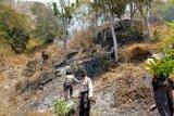 Ulah pemilik lahan lakukan Pembakaran, satu hektar Savana Sembalun terbakar (video)