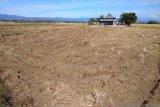 Kekeringan ancam sektor pertanian dan kebutuhan air bersih di Kabupaten Maros