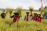 Pringsewu luncurkan layanan informasi penyuluh pertanian