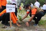 BNPB dan Pemkot tanam seribu pohon Pinago di pesisir pantai Pariaman (Video)