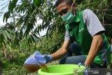 Dalami dugaan pencemaran, DLH Temanggung ambil sampel air Sungai Elo