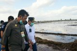 Menteri Pertanian tinjau lokasi penanaman perdana 'food estate' di Kalteng