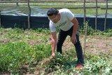 BPD Pusar OKU ajak manfaatkan lahan  tidur untuk ditanami kacang tanah