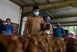 Bupati Temanggung minta industri rokok serap semua tembakau panenan petani