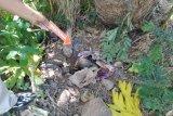 Malu bunting dari hasil hubungan gelap, seorang janda Malaysia di Lotim buang bayi ditindih batu