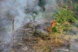 Foto udara kebakaran hutan dan lahan di Kabupaten Balangan, Kalimantan Selatan, Selasa (5/9/2020). Berdasarkan data Badan Penanggulangan Bencana Daerah (BPBD) Provinsi Kalimantan Selatan hutan dan lahan yang terbakar mengalami penurunan dibandingkan tahun lalu dari Januari hingga 13 September 2020 mencapai 103,12 hektare dan masih terus meluas. Foto Antaranews Kalsel/Bayu Pratama S.