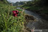 Warga bertani sayuran pada Daerah Aliran Sungai (DAS) Citarum yang surut di kawasan Curug Jompong , Kabupaten Bandung, Jawa Barat, Selasa (15/9/2020). Warga di sekitar kawasan tersebut memanfaatkan lahan DAS Citarum yang surut akibat musim kemarau dengan menanam sejumlah sayuran seperti labu siam, jagung, tomat dan bayam  untuk dikonsomsi serta dijual di sejumlah pasar tradisional. ANTARA JABAR/Novrian Arbi/agr