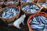 Kemarin  ekonomi, stok beras akhir tahun hingga penyaluran pupuk subsidi