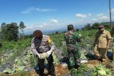 Kodim dan Polres Wonosobo borong sayuran petani 3 ton