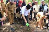 Ribuan bibit katak porang ditanam di Nagari Koto Baru, Gusmal berharap dorong ekonomi masyarakat
