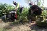 Petani menyiapkan elpiji bersubsidi sebagai pengganti bahan bakar minyak untuk mengoperasikan pompa air di area persawahan desa Blimbing, Kediri, Jawa Timur, Rabu (16/9/2020). Elpiji bersubsidi yang dinilai lebih ekonomis dari pada bahan bakar minyak sebulan terakhir mengalami kelangkaan di daerah tersebut karena banyak petani memanfaatkan elpiji sebagai bahan bakar pompa air untuk mengairi sawah seiring mengeringnya saluran irigasi karena musim kemarau. Antara Jatim/Prasetia Fauzani/zk
