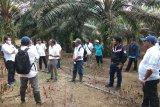 Holding Perkebunan Nusantara minta PTPN VII perbaiki manajemen panen