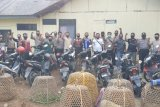 Pejudi sabung ayam kocar kacir digerebek, 29 motor diamankan polisi di Loteng