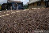 Petani menjemur biji cengkih di Desa Sindanglaya Kabupaten Bandung, Jawa Barat, Kamis (17/9/2020). Petani cengkih di kawasan tersebut mengatakan penjualan biji cengkih mulai mengalami peningkatan pada musim panen saat ini meskipun disegi harga mengalami penurunan dari Rp.50 ribu menjadi Rp. 48 ribu per kilogram yang dipasarkan ke sejulah daerah di Jawa Barat dan Jawa Tengah. ANTARA JABAR/Novrian Arbi/agr